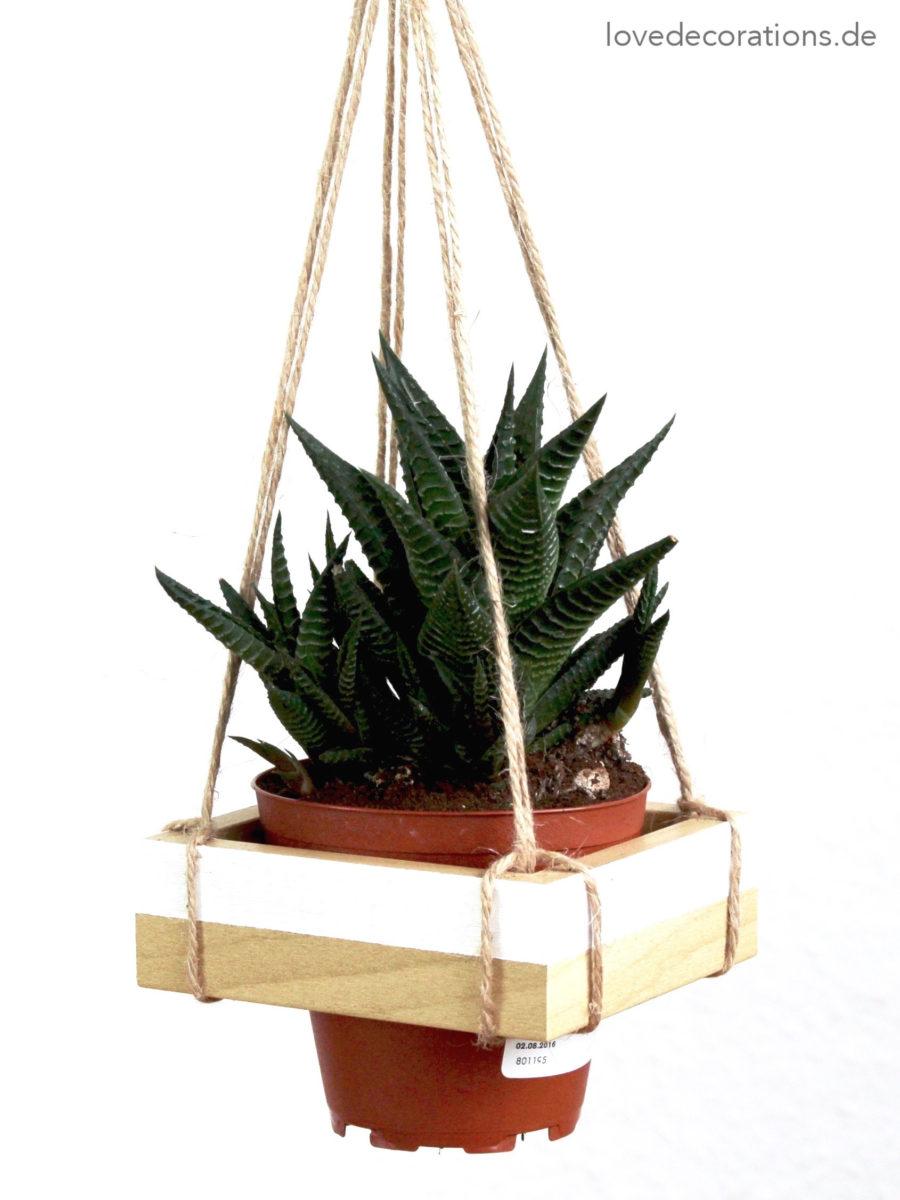 DIY Hänge-Pflanzenhalter, das zickige Model und Push-Benachrichtigungen