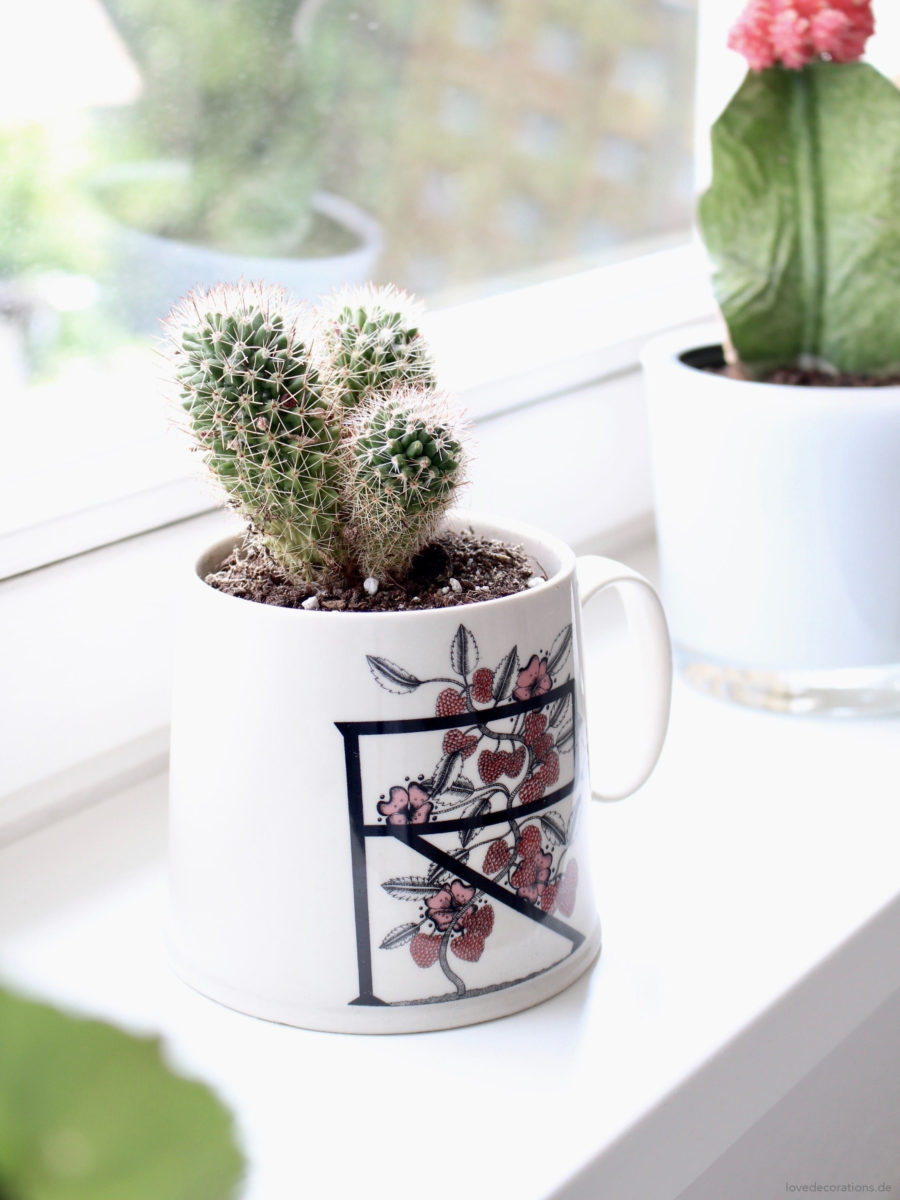 How to Repot a Cactus | DIY Kaktus umpflanzen