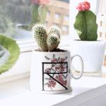 DIY Kaktus umpflanzen
